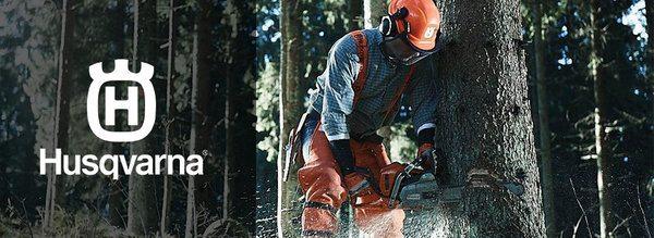 lumberjack sawing a tree down